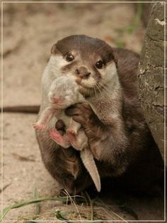 I love otters and seeing a baby one just made me love them even more! :)