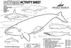 Humpback Whale Season Coloring and Activity Pages