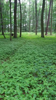 Gedankensammeln beim Spaziergang im Wald. Tut gut, vor allem am frühen Morgen.