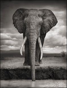 what a life - Elephant