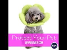 Protect Your Pet Online Pet Supplies, Your Pet, Collars, Dog Cat, Pets, Necklaces, Animals And Pets