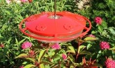 Bees and hummingbirds are often found in the same places in your garden. However, if you are putting out food for the hummingbirds it can attract an unwanted amount of bees. This is a guide about keeping bees out of he hummingbird feeder. Homemade Hummingbird Nectar, Hummingbird Plants, Raising Bees, Bee Boxes, Humming Bird Feeders, Humming Birds, How To Attract Hummingbirds, Backyard Birds, Bees Knees