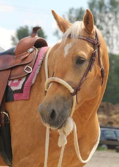 Looks so gentle. - Palomino horse