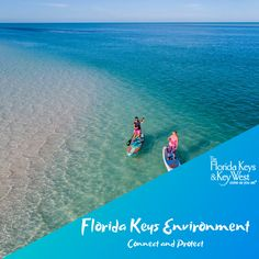 Whether you live in The Florida Keys, or just reside in a Keys state-of-mind, there's nothing more important than conserving and preserving the precious resources of the world around us. Plant Species, Florida Keys, Key West, Conservation, Mammals, Sustainability, Beach Mat, Connection, Environment