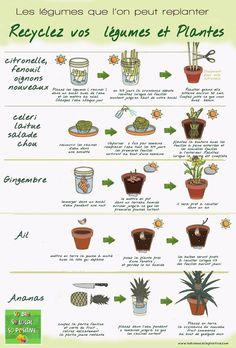 jardiner en appartement potager interieur legume a replanter