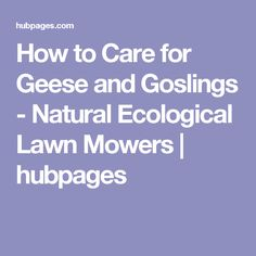 How to Care for Geese and Goslings - Natural Ecological Lawn Mowers | hubpages