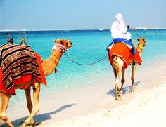 #HiltonHotel #camels #beach #dubai #sea #holiday 2004