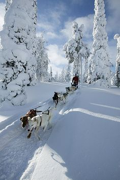A winter wonderland with dog-sledding in Lapland, Finland. What a fun travel experience this would be! And I've always been curious about visiting Lapland and Finland. Think I'll add it to my winter travel bucket list. Winter Szenen, Winter Magic, Lapland Finland, Winter Landscape, Helsinki, Bergen, Parks, Beautiful Places, Scenery