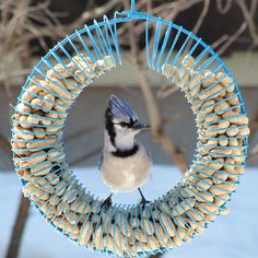 Peanut Feeders like this wreath style are versatile for different offerings