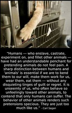 Great quote by Carl Sagan regarding human indifference to animals.  They feel pain just like a human animal, stop denying it.