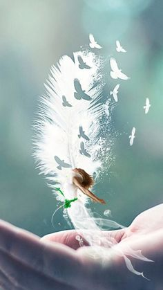 Love Wallpaper, Nature Wallpaper, Wallpaper Backgrounds, Creative Photography, Nature Photography, Regard Animal, Cute Love Pictures, Angel Pictures, Beautiful Fantasy Art