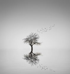 Reflection Tree by Bess™  on 500px