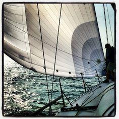 Sailing Photos & Videos by Leighton O'Connor