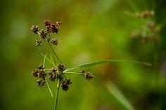 …herbe d'eau