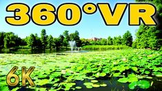 360° VR Lake Turtle Circus Park Field Visit Bucharest Travel Romania 6K ... Bucharest, Vr, Romania, Turtle, Tours, Travel, Outdoor, Outdoors, Turtles