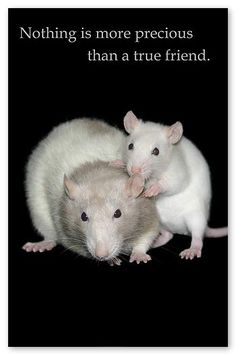 ratclub.org: This website has an excellent selection of toys and supplies for pet mice and rats