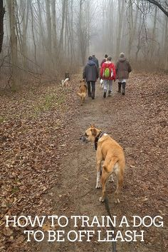 How to train a dog to be off leash. Tips include starting in a small, controlled area and dropping the leash so the dog drags the leash for several training sessions.