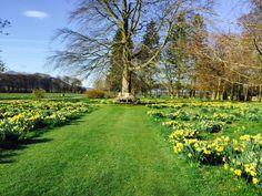 Spring at Myres Castle 2017
