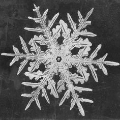 snowflake.  notice the concentric hexagons and what reminds me of feathers on the arms.