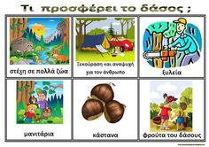 Forest Theme, Forest Animals, Trees To Plant, Activities For Kids, Safari, Kindergarten, Preschool, Places To Visit, Education