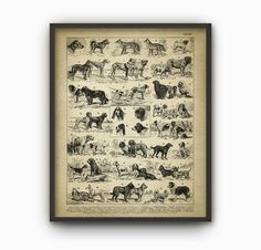 Antique Dog Breeds Illustration Print  Dog Types by QuantumPrints