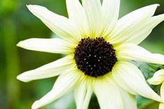Cuadro White Flower II