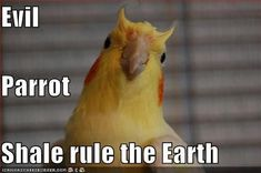Evil horned parrot shall rule the earth. Peace was never an option!