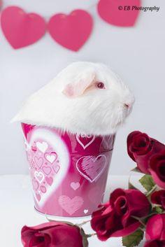 love Piggy by Erin Bonilla on 500px