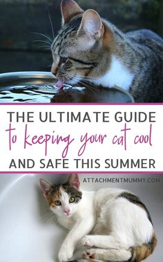 Cat Care Kittens How to Help Your Cat Keep Cool in the Summer Heat - Keeping a cat cool when the mercury rises may not be the first thing you think of, but cats are less able to regulate their body temperature than oth… Cat Care Tips, Pet Care, Pet Tips, Cute Cats, Funny Cats, Cat Whisperer, F2 Savannah Cat, Cat Health, Health Tips