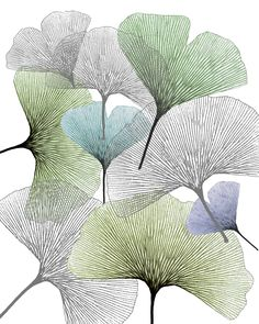 skeleton ginko leaves