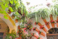 En af Cordobas ældste gårdhaver #Cordoba #Andalusien #Patio