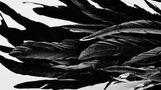 Kruk means raven in Polish Michael Kunze, Castiel Aesthetic, Maou Sama, Yennefer Of Vengerberg, Raven Queen, The Adventure Zone, Tv Supernatural, She Wolf, Into The Fire