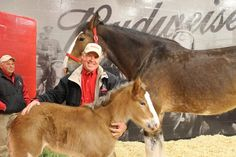 Fans name Budweiser's baby Clydesdale from Super Bowl ad