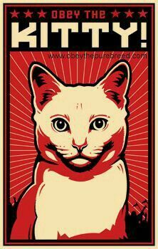 Obey the Kitty! White Cat Posters> White Cat> Obey the Pure breed - Coupons Cool Cats, I Love Cats, Crazy Cat Lady, Crazy Cats, Cat Posters, Here Kitty Kitty, Sleepy Kitty, Kitty Cats, Cats And Kittens