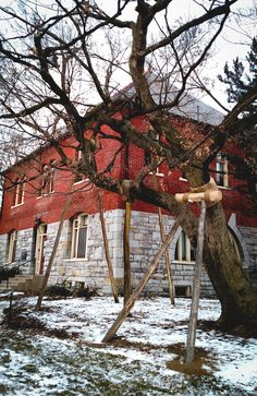 1/16/15 -- Japanese master gardeners use traditional support crutches to help preserve threatened maple tree. Quite a few trees use this support system at Penn State, like these outside of the Old Botany Building.