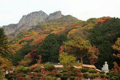 Autumn foliage in #Naejangsan National Park, Korea (November 1, 2015)