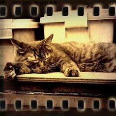 ダレてます。  The cat was tired and has given up the body.