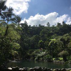 【kaori.k_0731】さんのInstagramをピンしています。 《** ハネムーンレポ011 ** ホテルで1番大きなプール🏖 池じゃないかと思うくらい自然がいっぱいでプールとは思えない感じでした😳 しかも、途中けっこう深いところがあって150cm身長の私は「ヤバイ‼︎」と思うところが💦💦 泳ぎの練習しなきゃ 笑 ** #自然 #2016夏婚 #旅行 #旅 #新婚旅行  #ハネムーン #ハネムーンレポ #ロイヤルピタマハ #プール #池 #風景写真 #風景 #写真 #ウブド #インドネシア #森 #緑》
