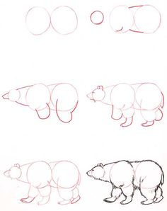 Learn to draw: Bear