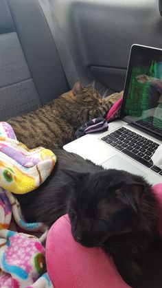 Kittys on roadtrip