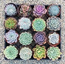 Decoração - Cactos e suculentas - Jardim com diversas suculentas.