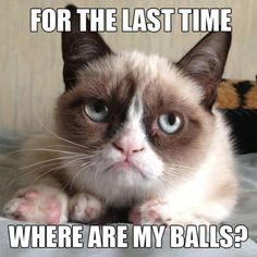 """spay and neuter even if your grumpy pet doesn't """"want to be"""" grumpy cat balls humor"""