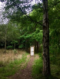 door in forest - Google Search Doors, Google Search, Plants, Plant, Planets, Gate