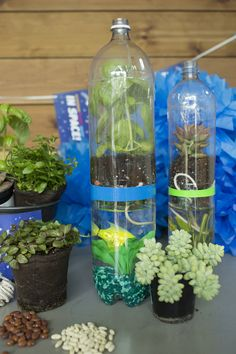 This DIY greenhouse and aquarium (with a robotic fish!) is easy to make. Learn how at MSI's Summer Brain Games program.