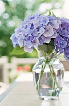 Blue Hydrangeas -- So Simple & So Pretty