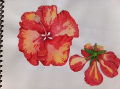 Hibiscus using Derwent inktense pencils - dry.