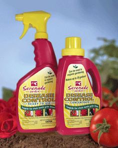 Serenade Garden Spray is a fungicidal bio-control containing Bacillus subtilis, a soil-dwelling bacterium. It can control leaf blight, black mold, powdery mildew, and other plant fungal diseases. It is OMRI listed and Certified Organic.