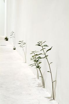Installation view, Santa MoniCA, Barcelona, Spain, 2008 by Tony Matelli