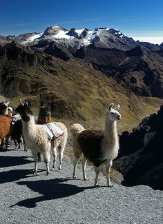 Sharing the trail, La Paz region, Bolivia (by Jessie Reeder).