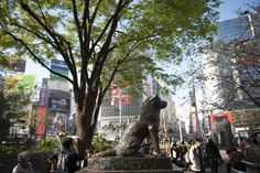 Local hotspot: Hachikō. Tokyo's favorite meeting place and bronze-cast canine, Hachikō, waits and watches as people reunite at his feet.